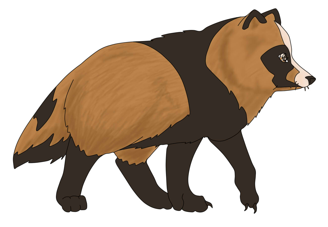Raccoon Dog clipart #18, Download drawings