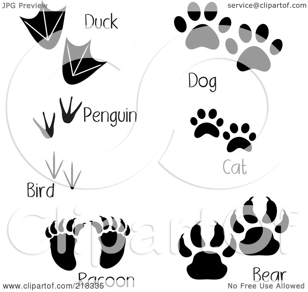 Raccoon Dog clipart #5, Download drawings