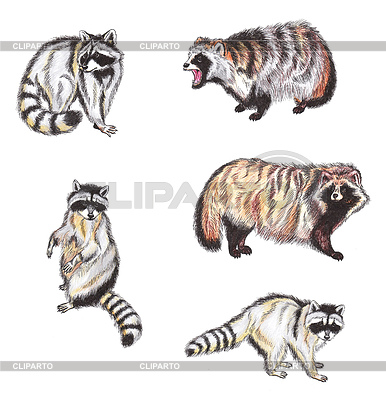 Raccoon Dog clipart #20, Download drawings
