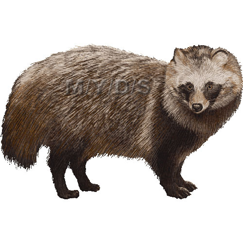 Raccoon Dog clipart #17, Download drawings