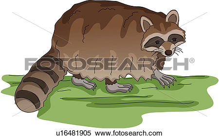 Raccoon Dog clipart #3, Download drawings