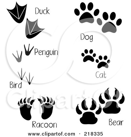 Raccoon Dog clipart #2, Download drawings