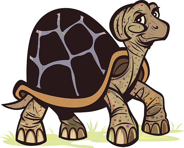 Radiated Tortoise clipart #6, Download drawings