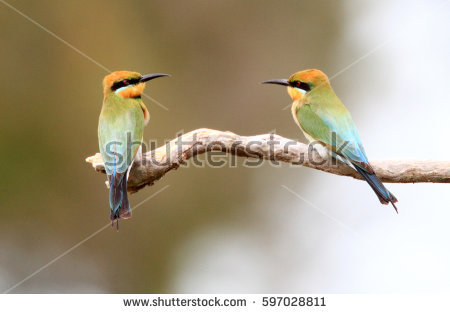 Rainbow Bee-eater clipart #7, Download drawings