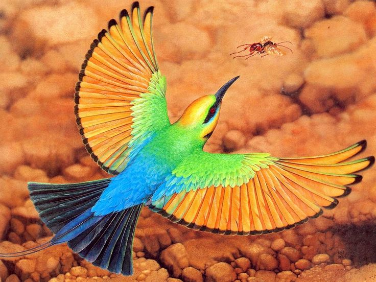 Rainbow Bee-eater clipart #1, Download drawings