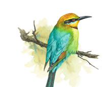 Rainbow Bee-eater clipart #15, Download drawings