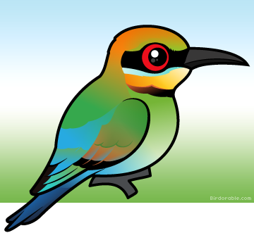Rainbow Bee-eater clipart #19, Download drawings