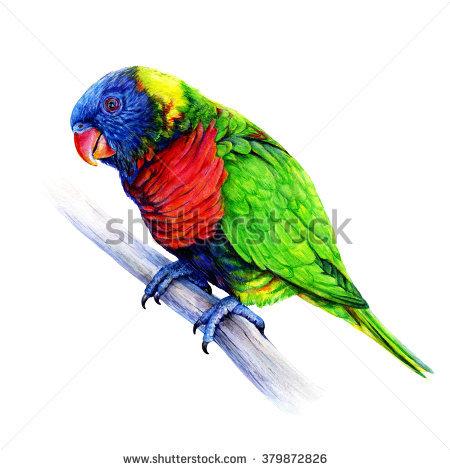 Rainbow Lorikeet clipart #15, Download drawings