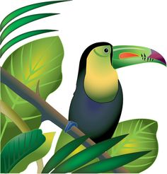 Rainforest clipart #7, Download drawings