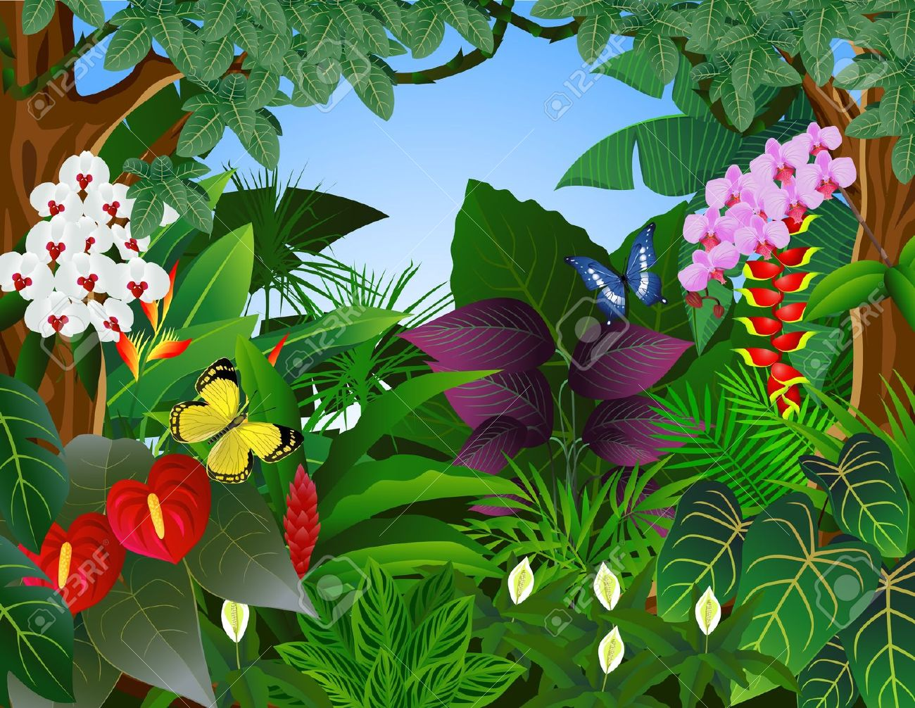 Rainforest clipart #15, Download drawings