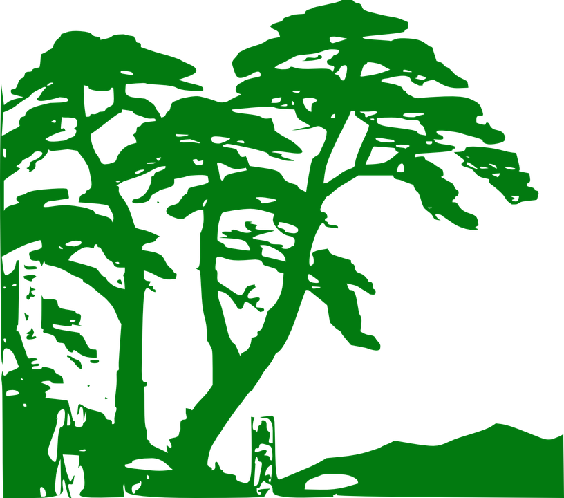 Rainforest svg #10, Download drawings