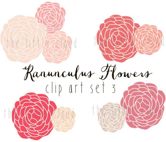 Ranuncula clipart #9, Download drawings