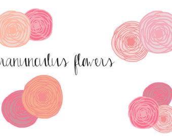 Ranuncula clipart #8, Download drawings