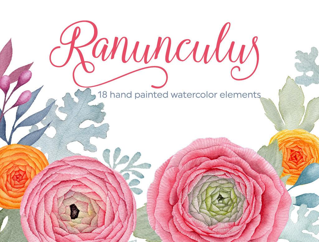 Ranuncula clipart #20, Download drawings