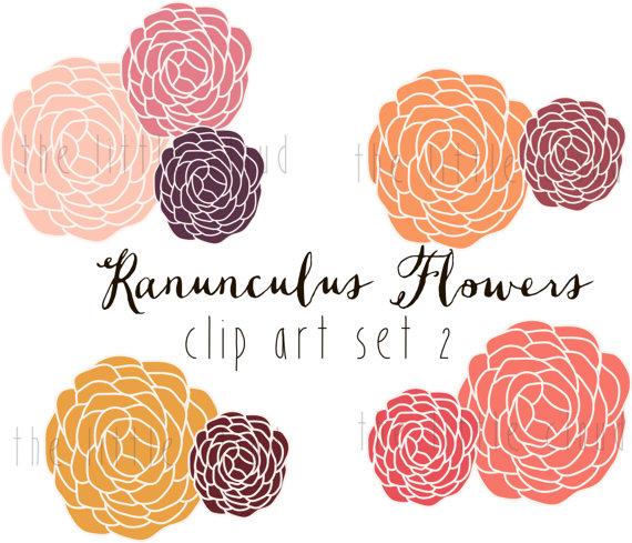 Ranuncula clipart #18, Download drawings
