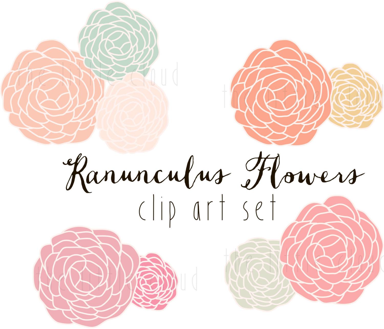 Ranuncula clipart #16, Download drawings