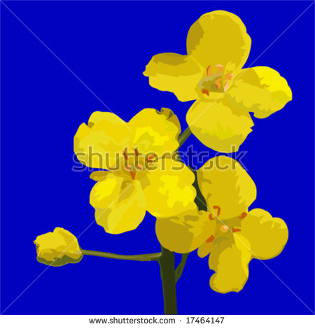 Rapeseed clipart #6, Download drawings
