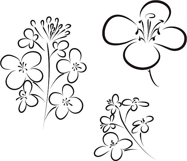 Rapeseed clipart #2, Download drawings