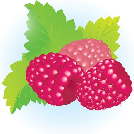 Raspberry clipart #12, Download drawings
