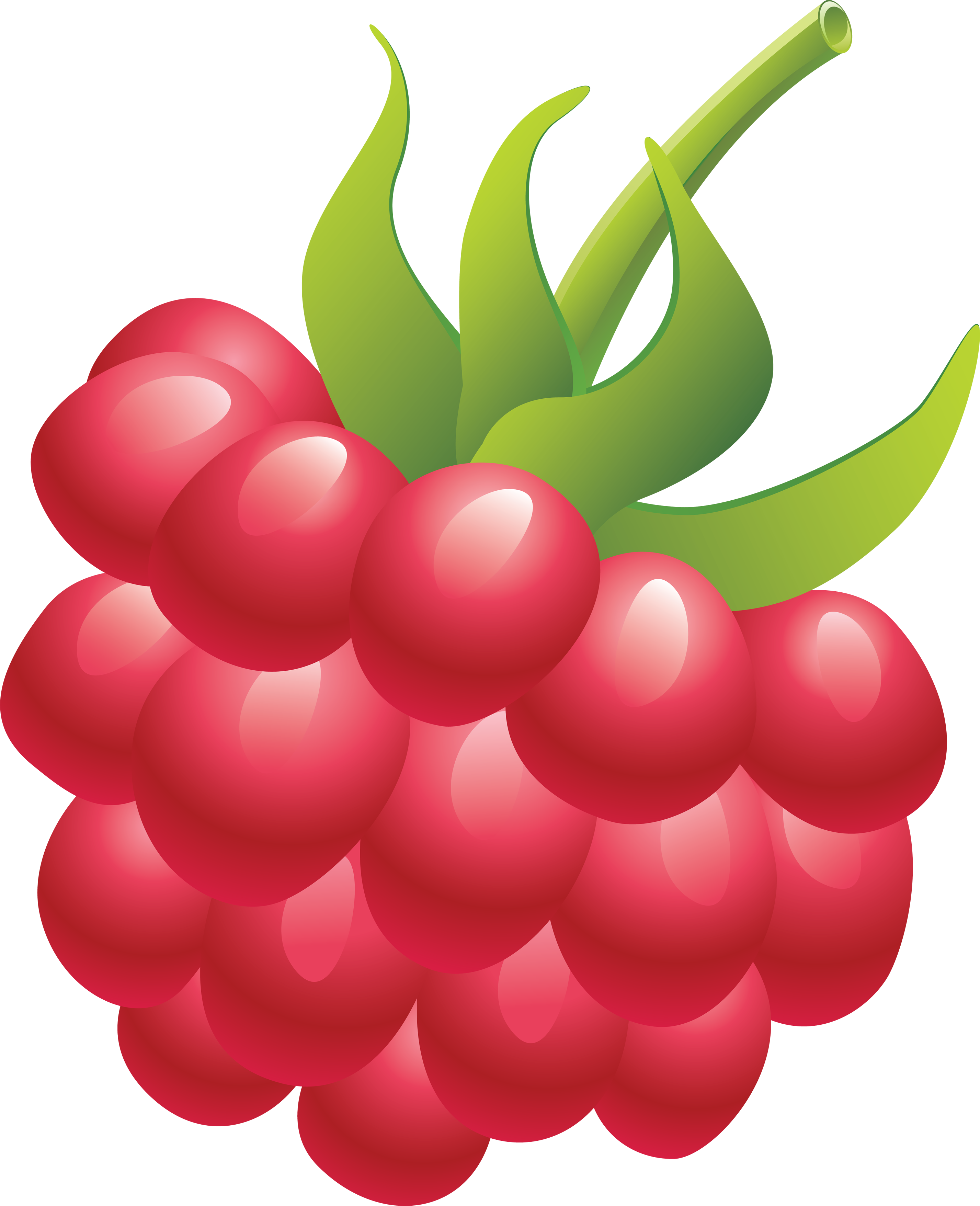 Raspberry clipart #7, Download drawings