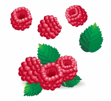 Raspberry clipart #8, Download drawings