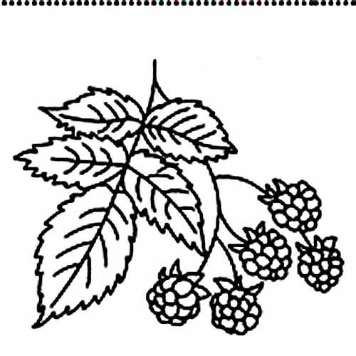 Raspberry coloring #13, Download drawings