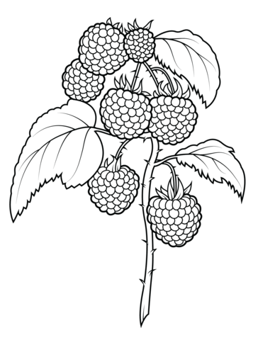 Raspberry coloring #5, Download drawings