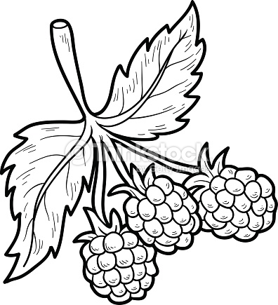 Raspberry coloring #10, Download drawings