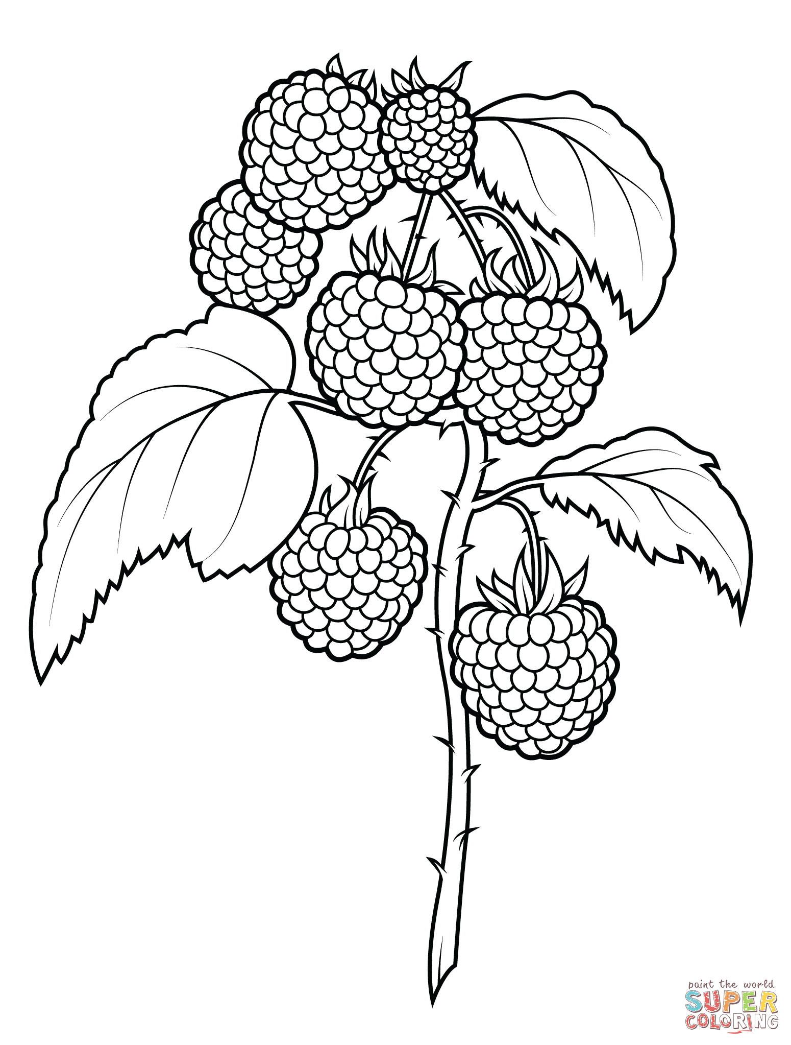 Raspberry coloring #7, Download drawings
