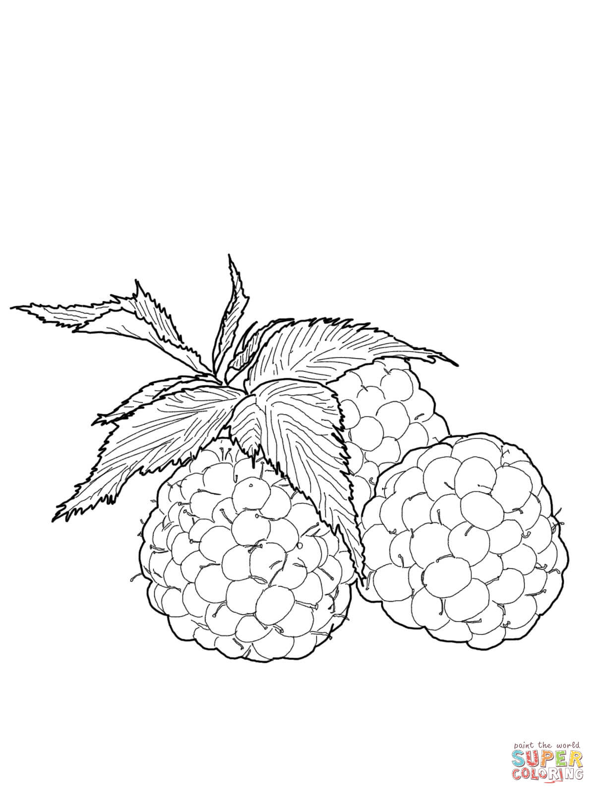Raspberry coloring #17, Download drawings