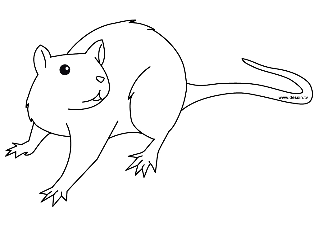 Rodent coloring #14, Download drawings