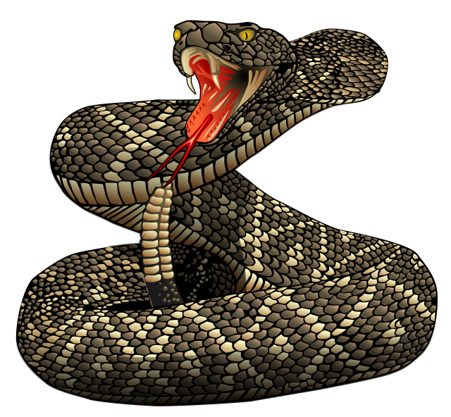 Rattlesnake clipart #10, Download drawings