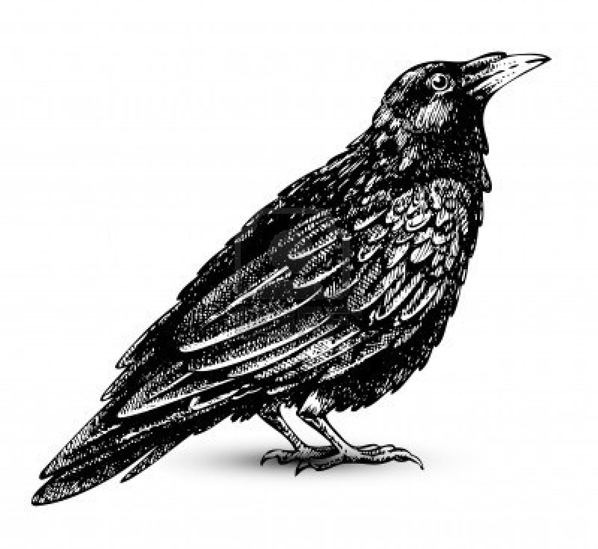 Raven clipart #5, Download drawings