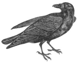 Raven clipart #1, Download drawings
