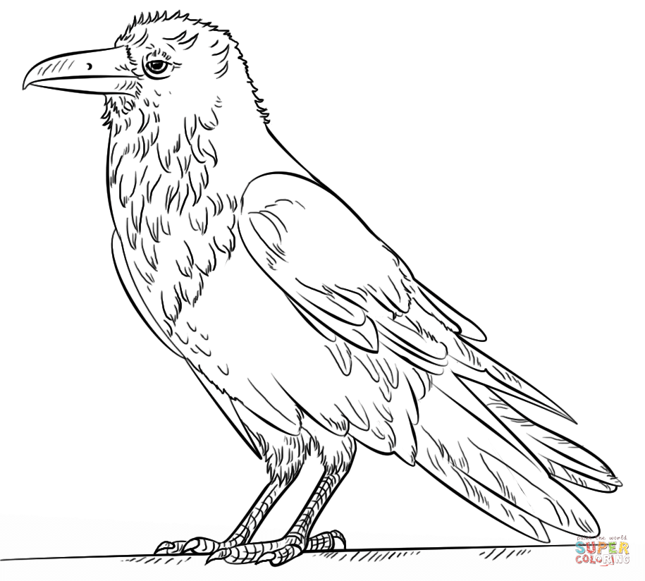 Common Raven coloring #16, Download drawings
