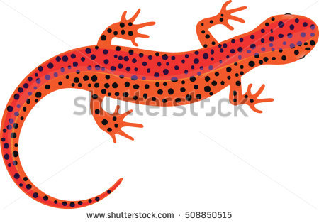 Red Bellied Newt clipart #9, Download drawings