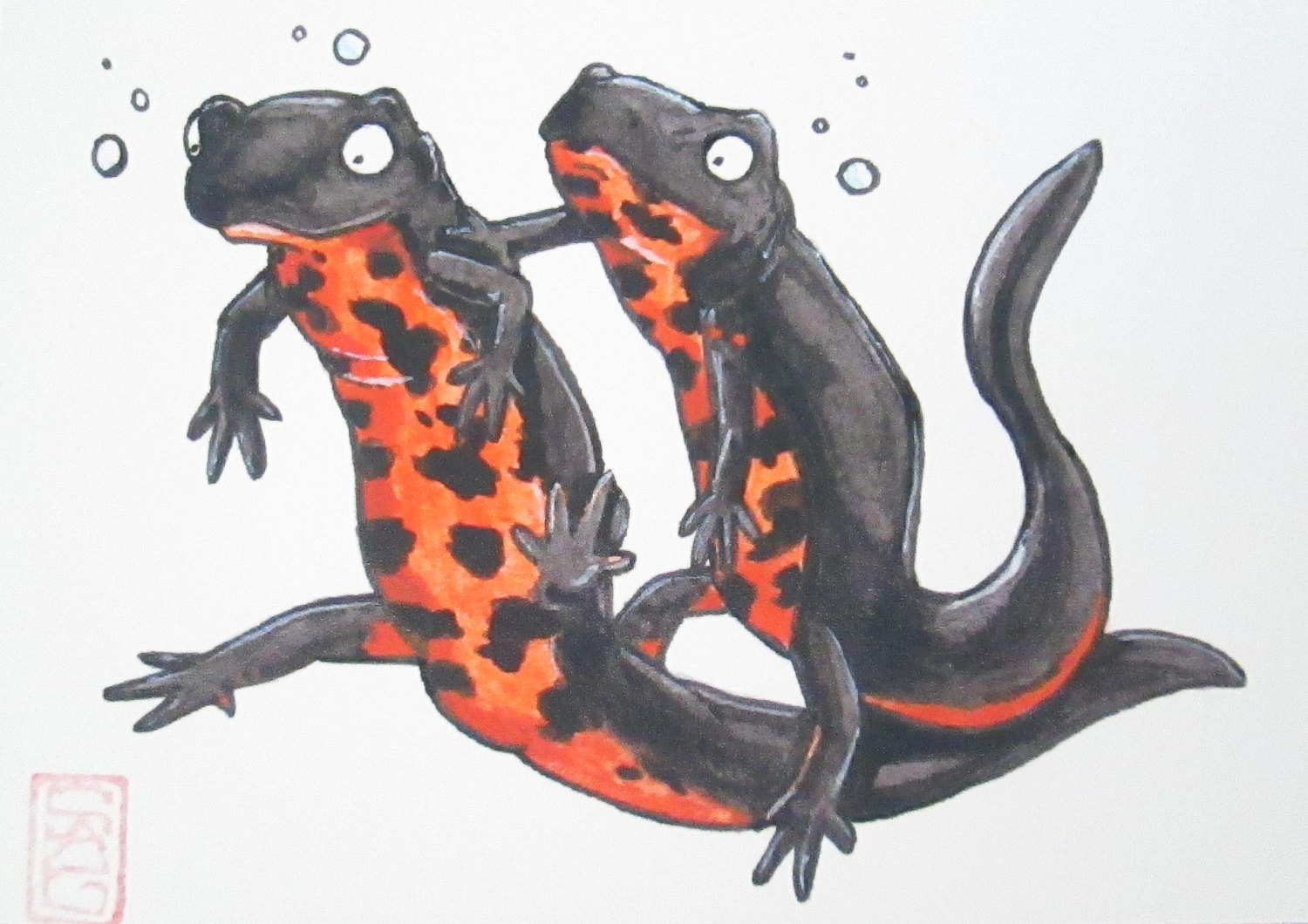 Red Bellied Newt clipart #16, Download drawings