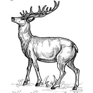 Red Deer clipart #13, Download drawings