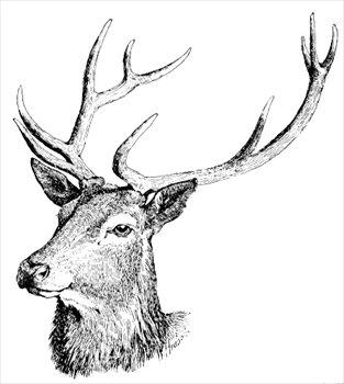 Red Deer clipart #14, Download drawings