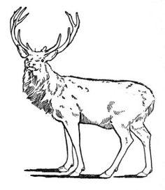 Red Deer clipart #11, Download drawings