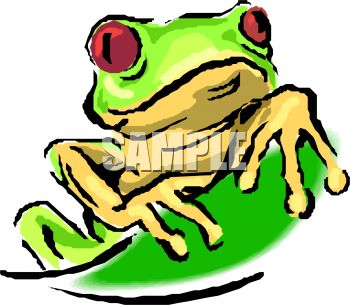 Red Eyed Tree Frog clipart #15, Download drawings