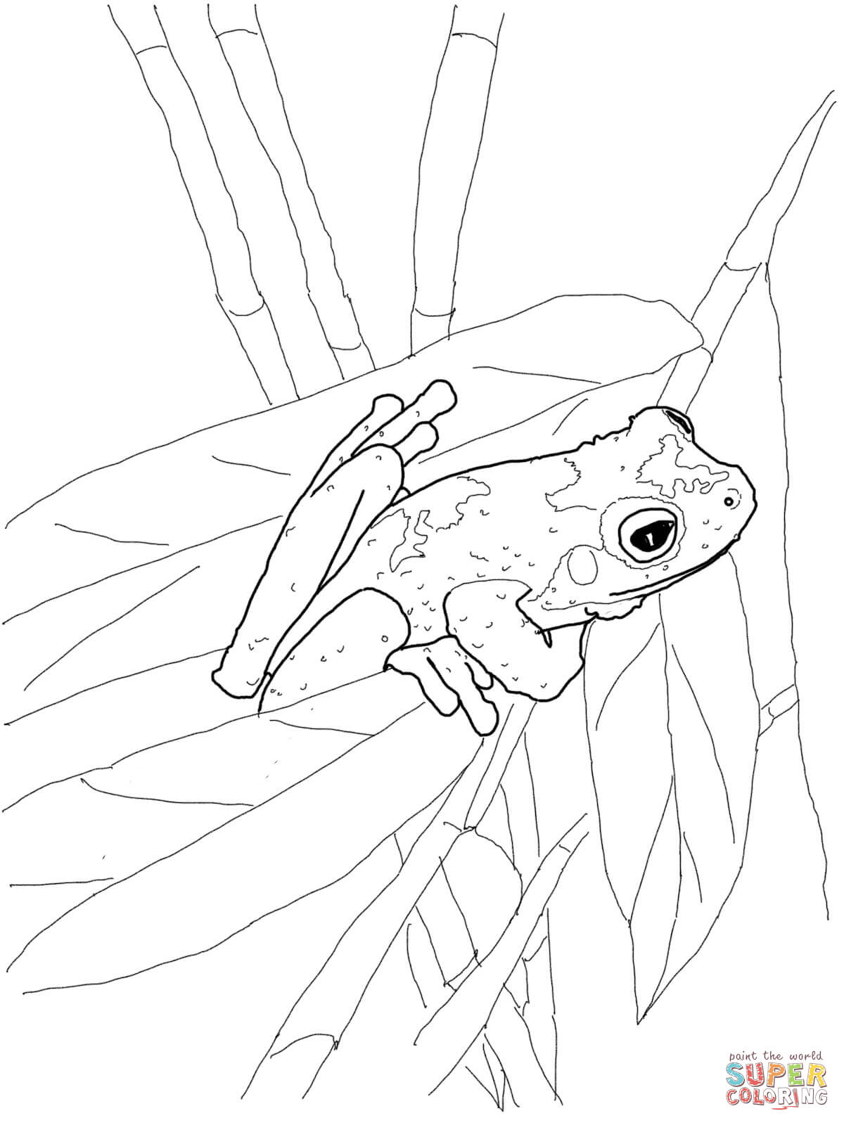 Tree Frog coloring #16, Download drawings