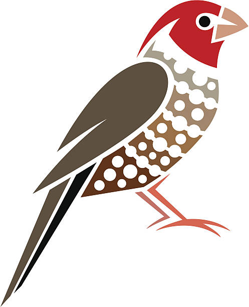 Red Headed Finch clipart #15, Download drawings