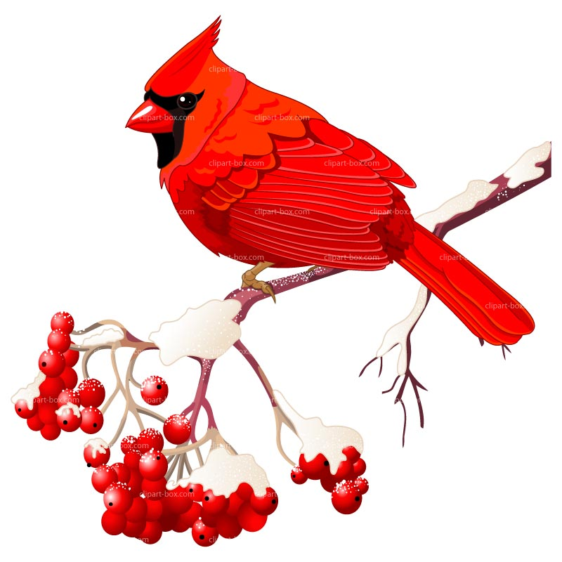 Red Headed Finch clipart #7, Download drawings