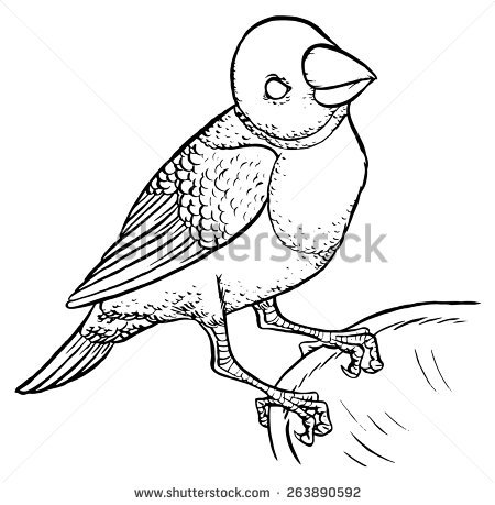 Red Headed Finch clipart #14, Download drawings