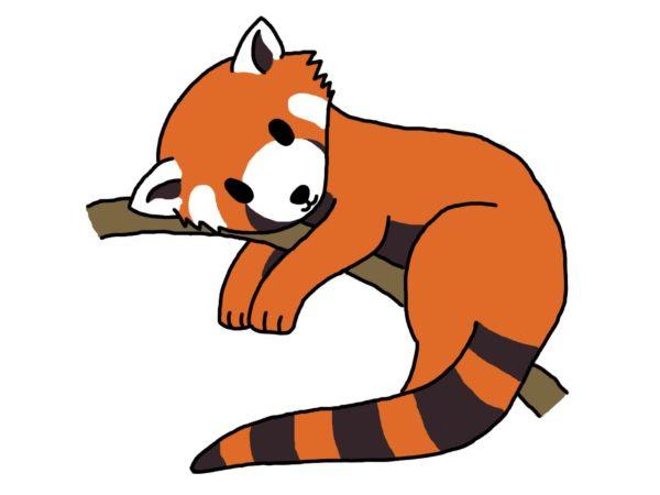 Red Panda clipart #7, Download drawings