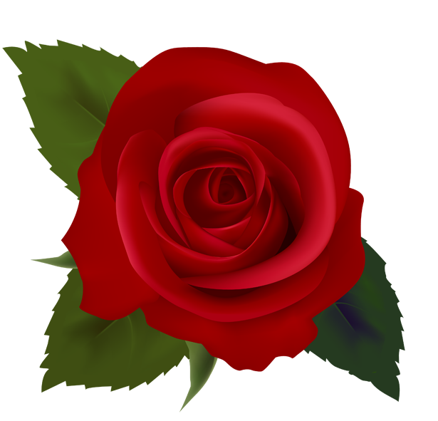 Red Rose clipart #17, Download drawings