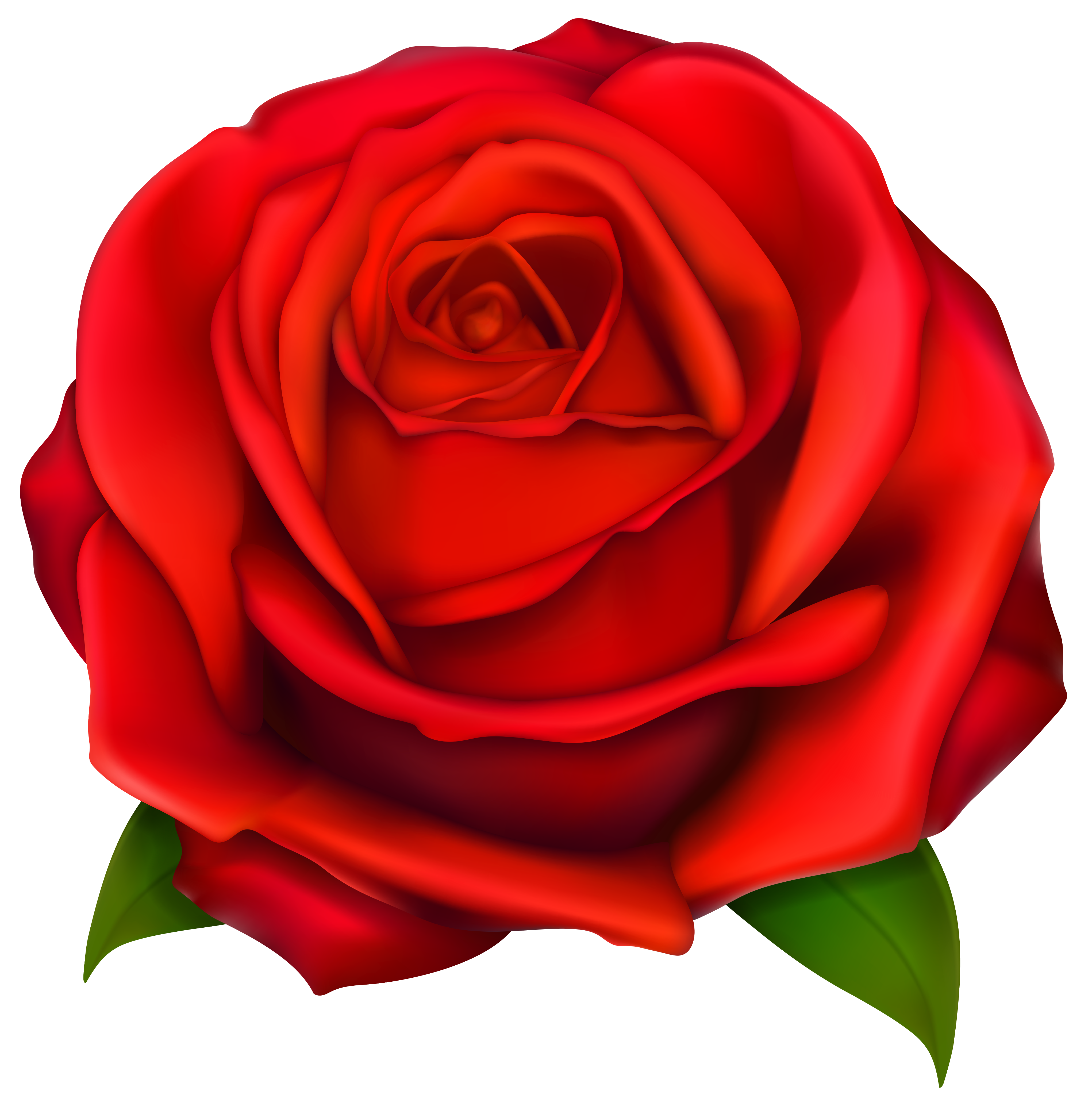Red Rose clipart #1, Download drawings