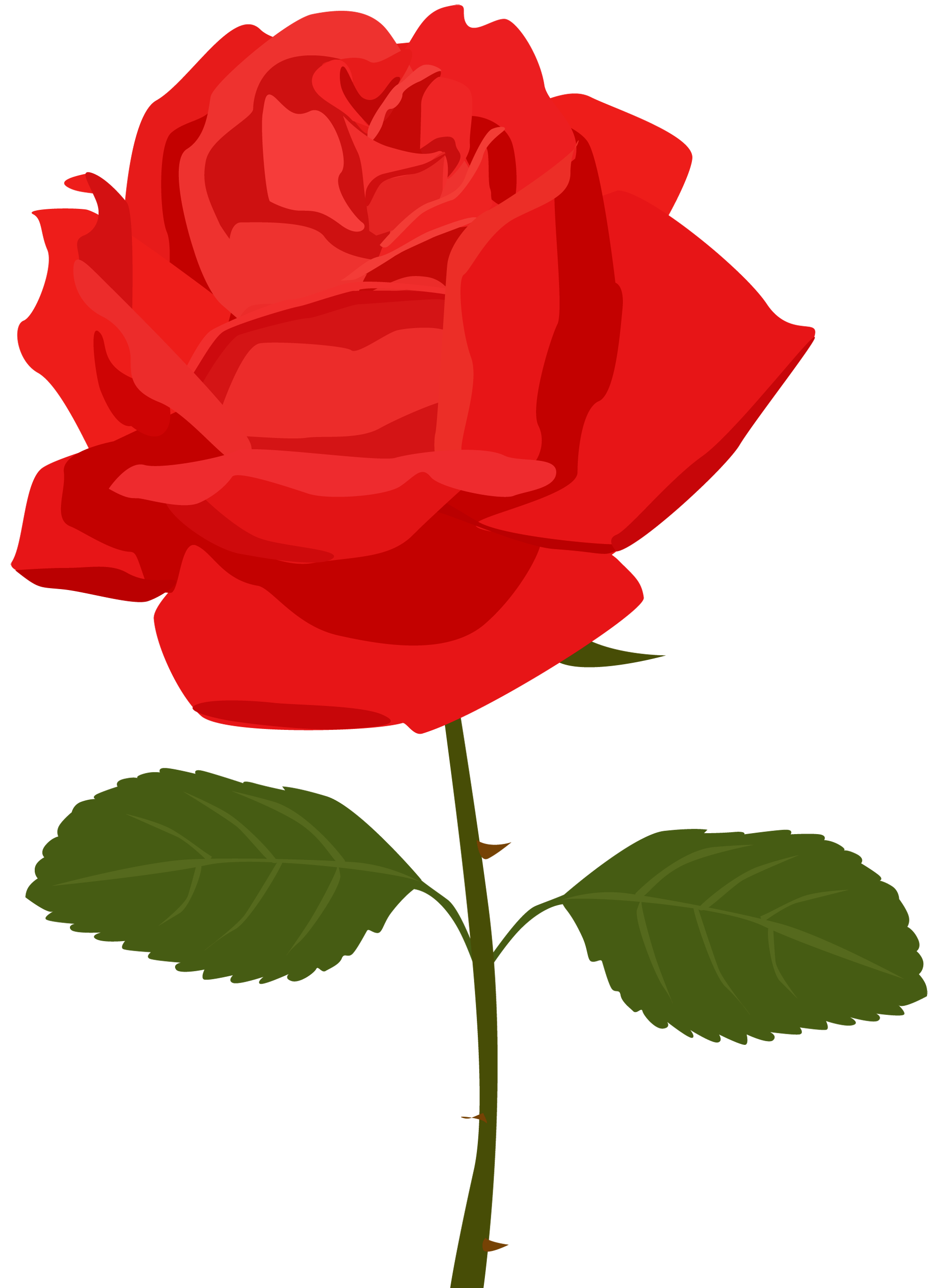Red Rose clipart #11, Download drawings