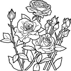 Red Rose coloring #12, Download drawings
